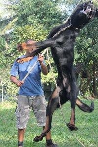 Dogfather Dog Training Reviews